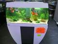 Aquarium avec meuble, filtration, chauffage et éclairage SCUBABAY 270l