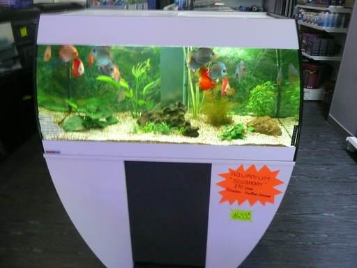 Accessoires aquarium for Vente aquarium en ligne